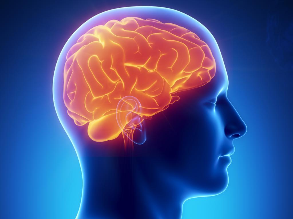 Схема мозга человека