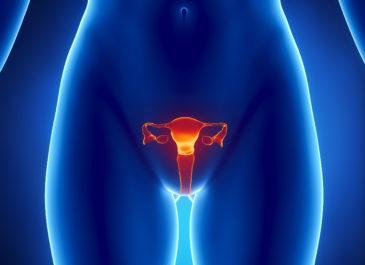 Женская мочеполовая система