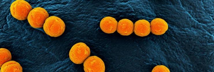 Золотистый стафилококк в кишечнике: симптомы, лечение