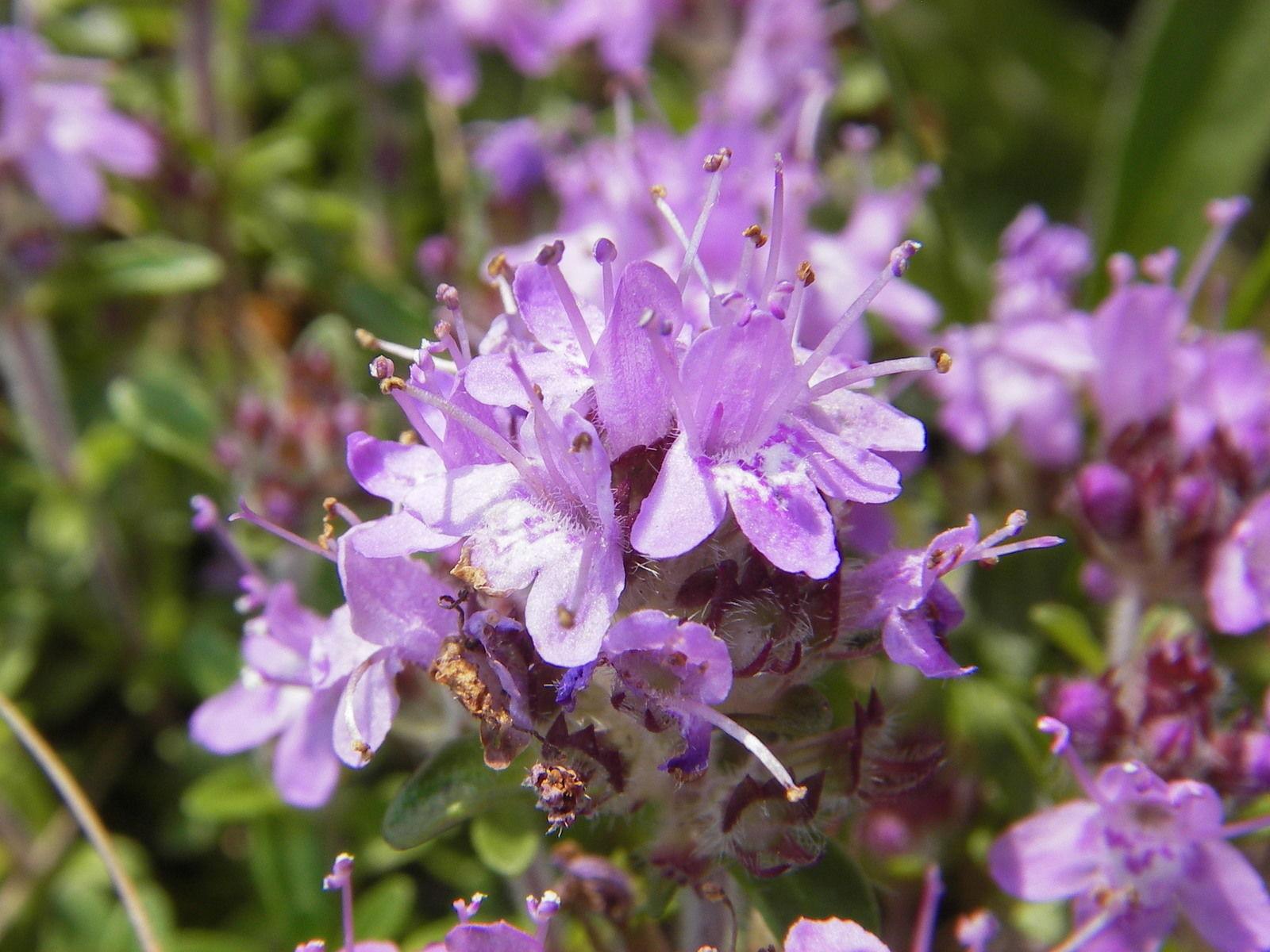 Фото цветок лен обл
