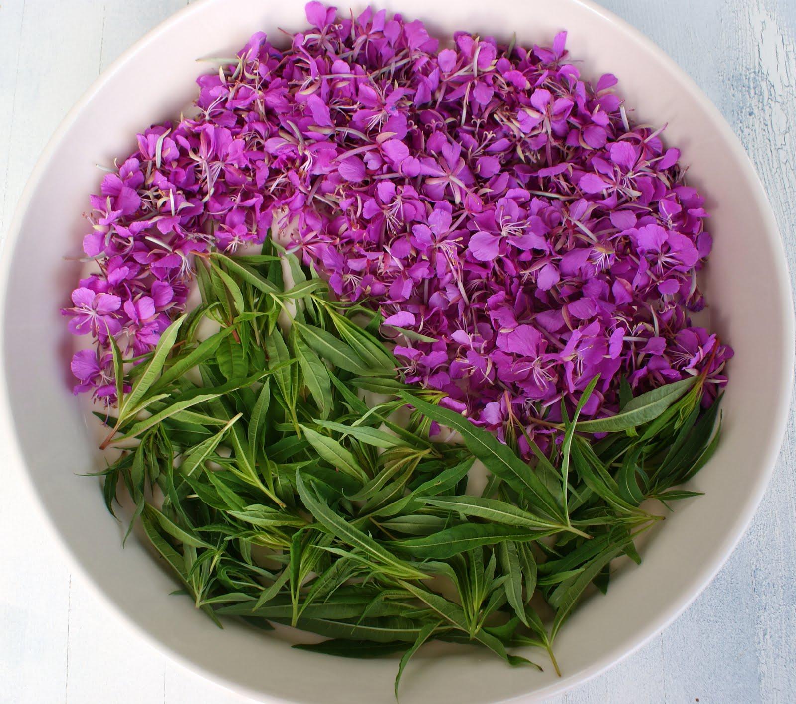 Растение иван