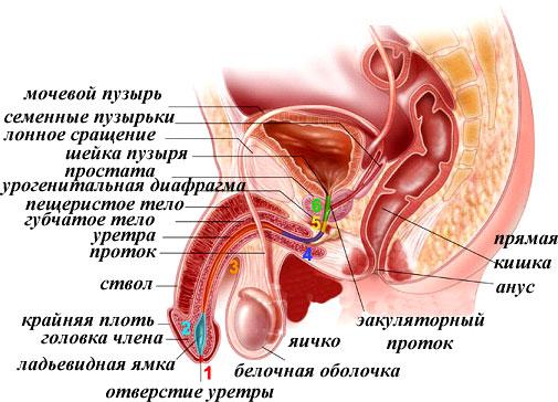 Лекарства от простатита производитель