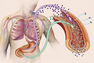 схема попадания инсулина и глюкозы в кровь
