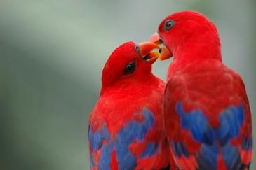 влечение у птиц