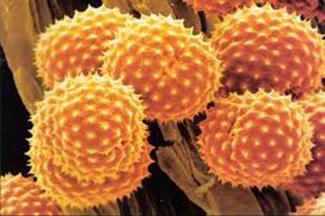 аллергены под микроскопом