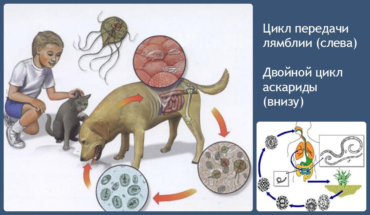 Псориаз и паразиты какие глисты вызывают заболевание