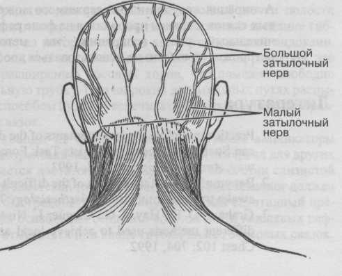 Невралгия затылочного нерва может вызывать головные боли.