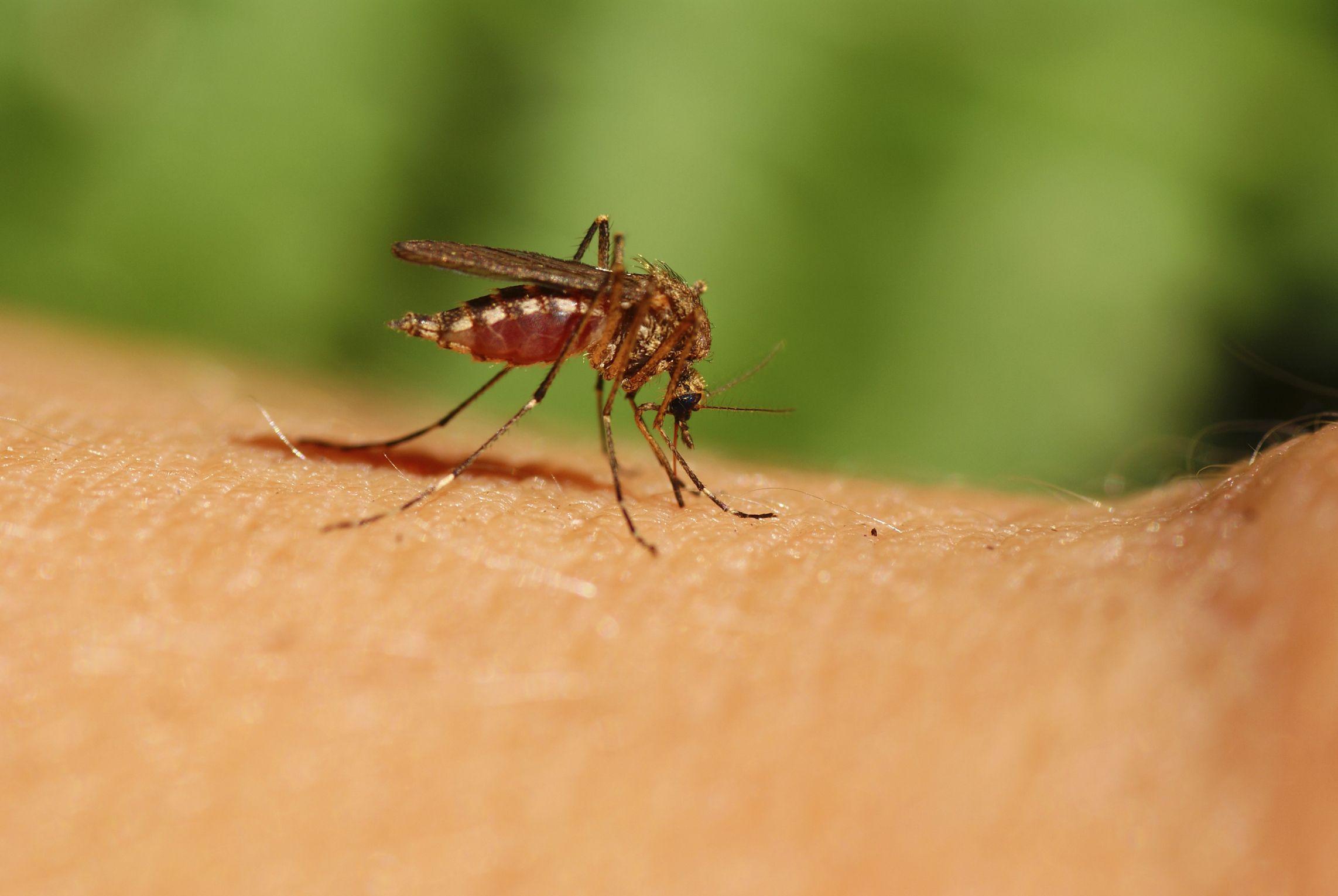 В преддверии опасного сезона: что важно знать о лихорадке Западного Нила