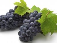 две кисти синего винограда