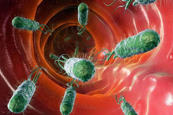 Бактерия Хеликобактер пилори под микроскопом