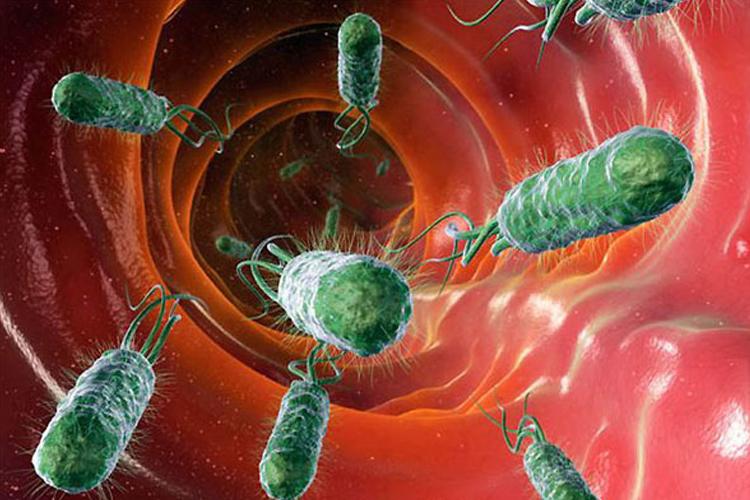 Избавление от грибков вирусов бактерий