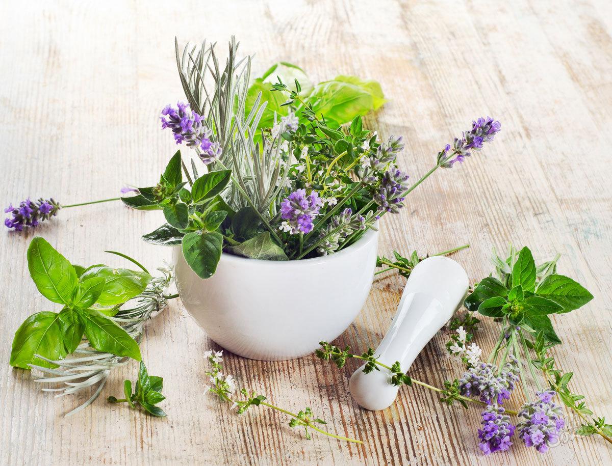 Шалфей женская трава для лечения симптомов климакса