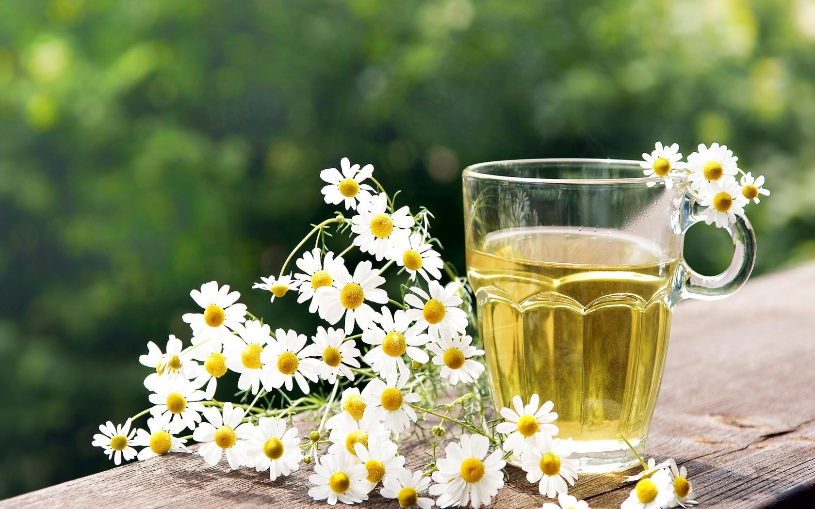 Как вылечить ангину ромашкой, шалфеем и другими целебными травами
