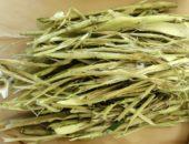 Лечебные свойства коры осины
