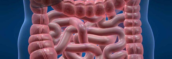 Заболевания кишечника, симптомы и лечение заболеваний кишечника
