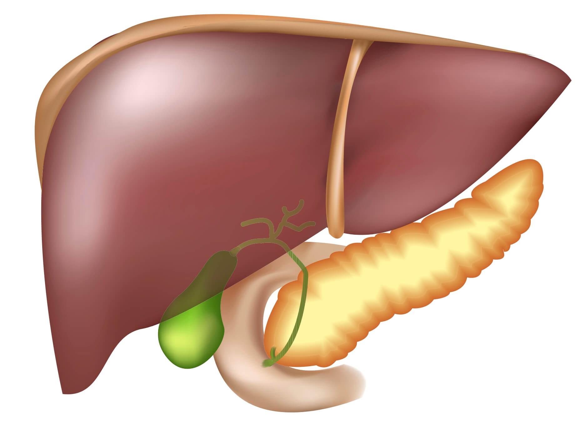 Заболевания печени: симптомы, признаки, лечение болезней печени
