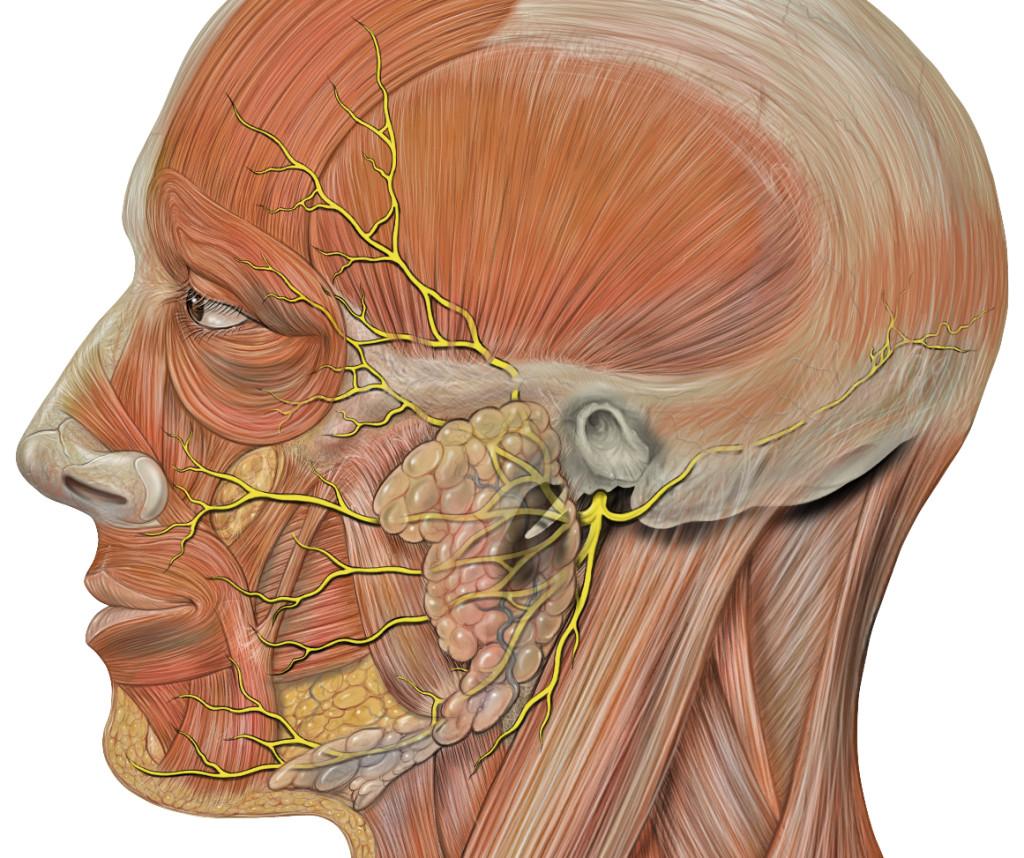 Особенности невралгии затылочного нерва