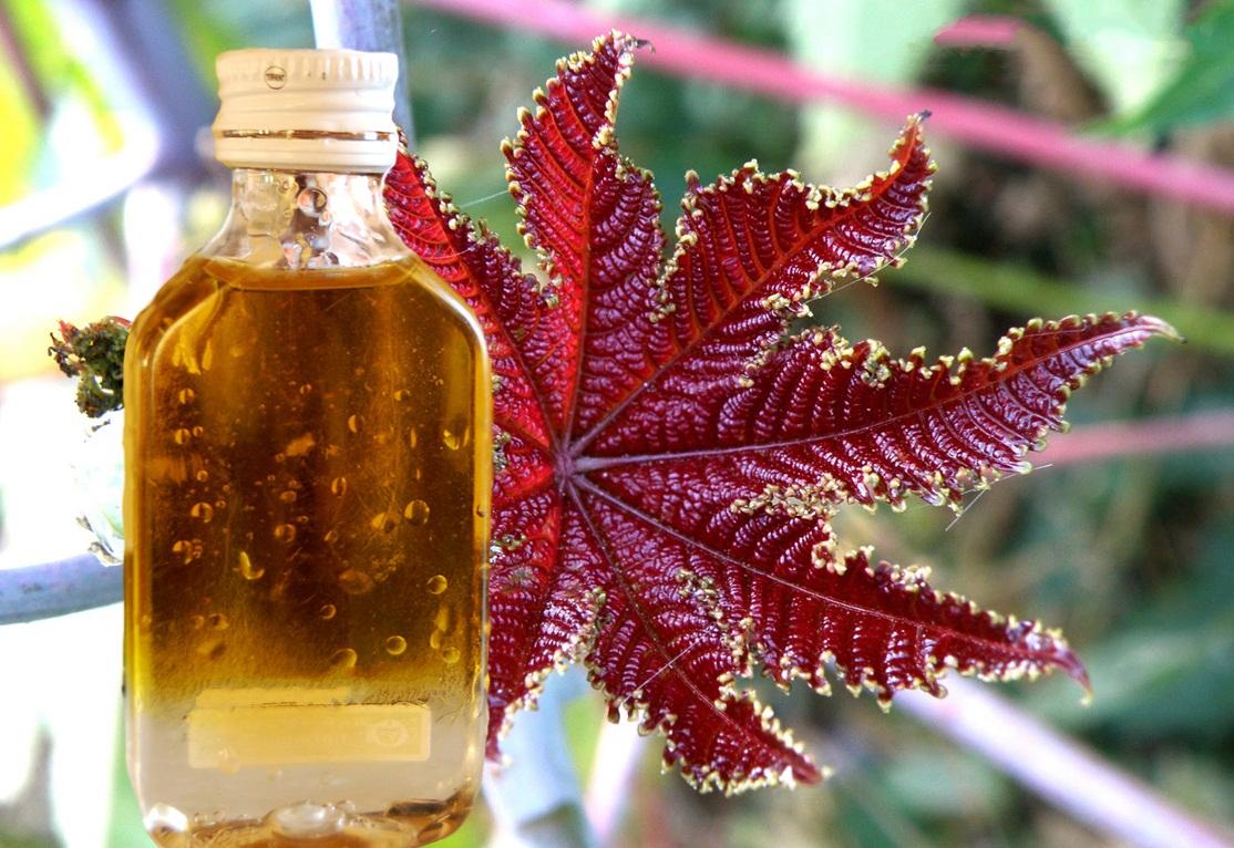 Касторовое масло для будущей мамы: только наружно