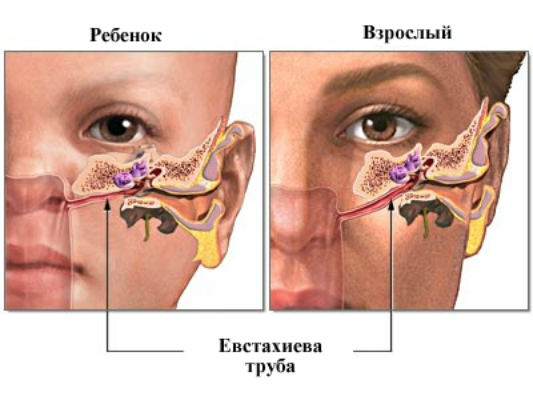 Евстахиева труба у ребёнка и взрослого