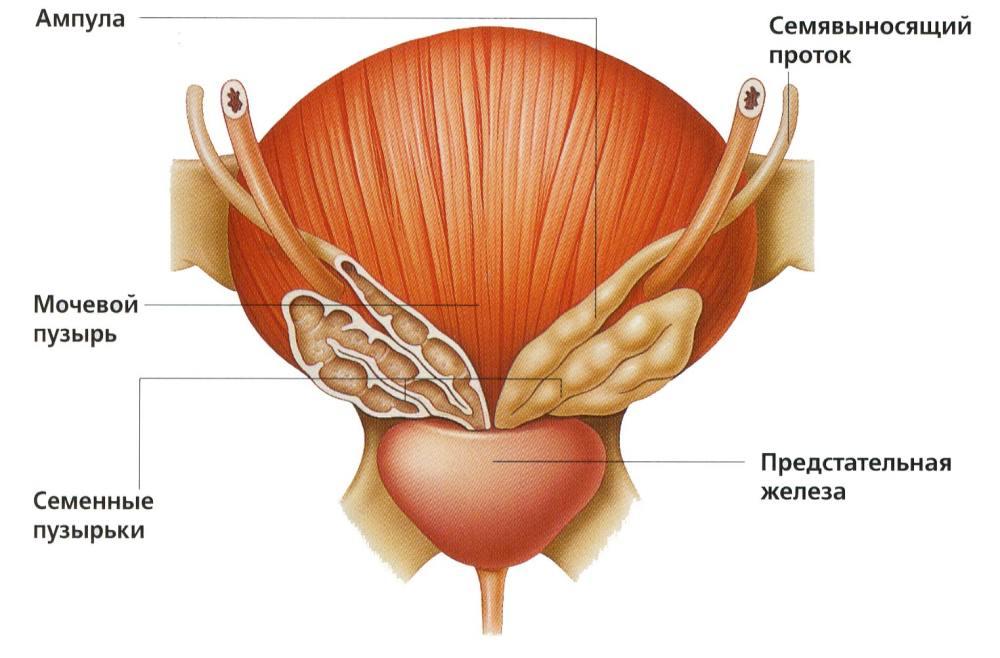 Увеличенная простата причины лечение