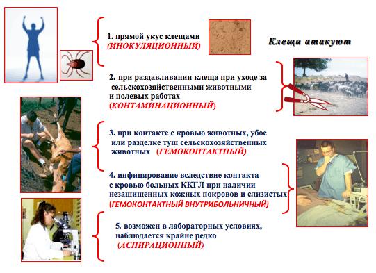 болезни от паразитов