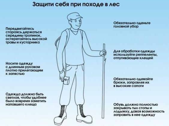 Методы защиты от нападения клеща