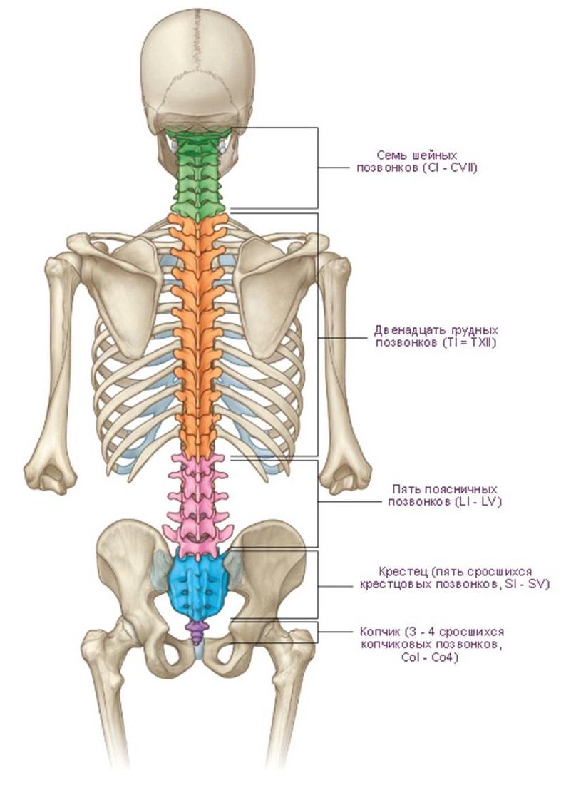 Поясничный и шейный остеохондроз лечение