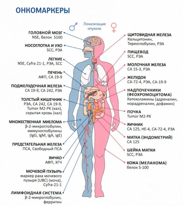 Перечень онкомаркеров