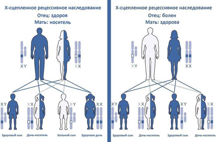 Схема передачи гемофилии