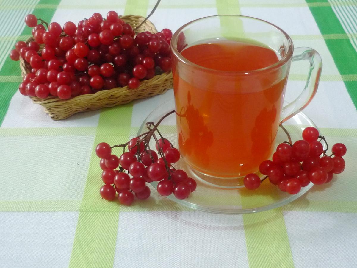 Применение калины при простуде: проверенные домашние рецепты