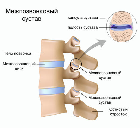 Межпозвонковый сустав