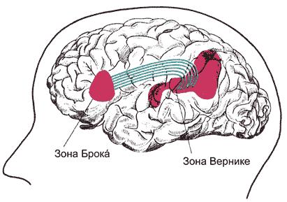 Участки головного мозга