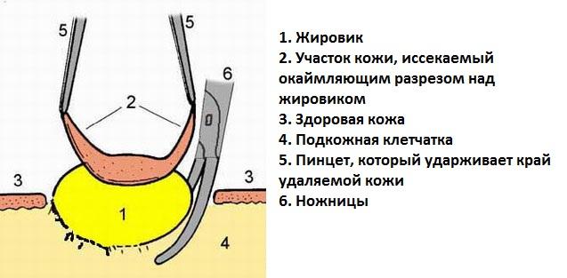 Адрес областной больницы г. новосибирск