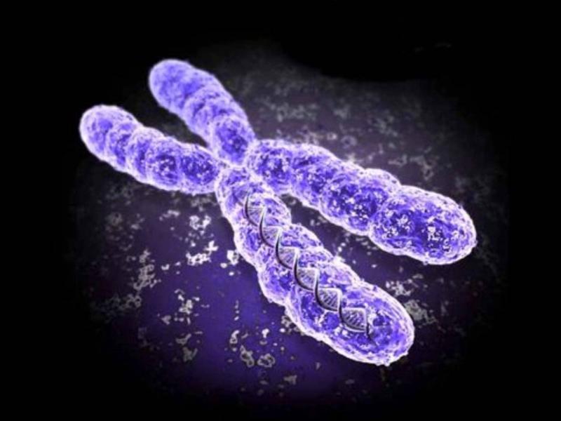Синдром Шерешевского — Тёрнера: особенности течения и лечения патологии