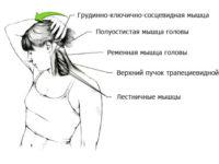 Растяжка мышц-разгибателей шеи
