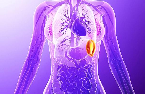 Анатомическое расположение селезёнки