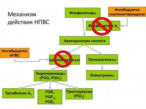 Цикл арахидоновой кислоты