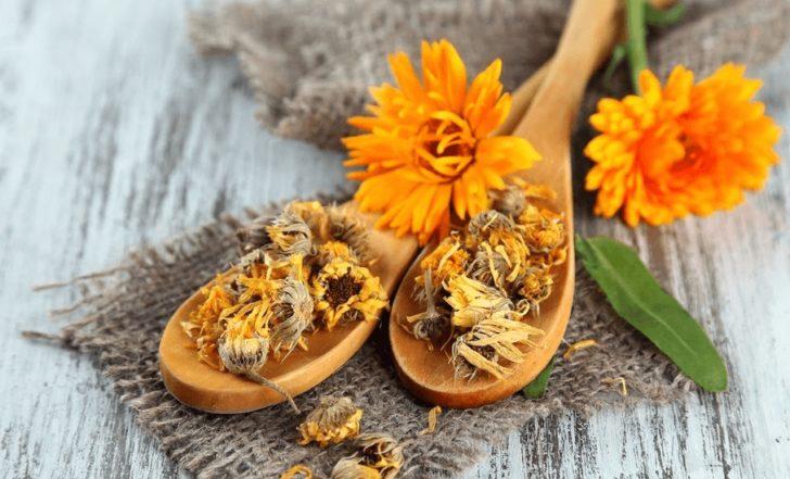 Цветки календулы свежие и засушенные