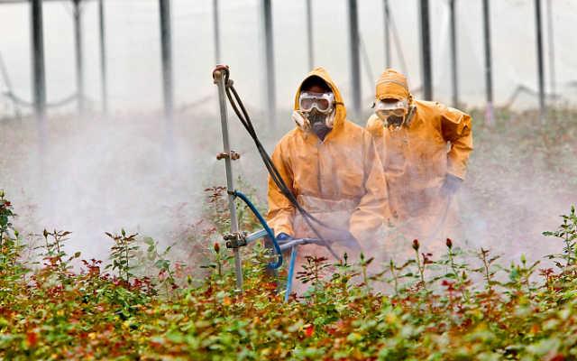 Мужчины в специальных костюмах обрабатывают растения пестицидами