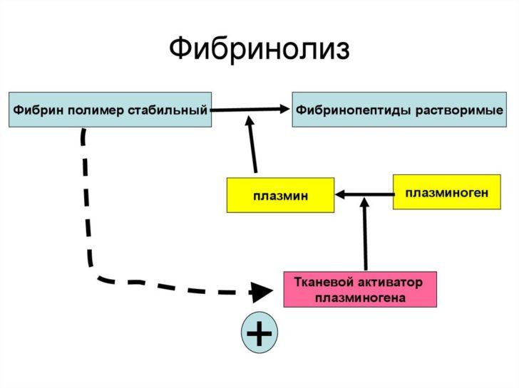 Схема фибринолиза
