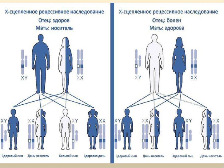 Схема наследования гена гемофилии