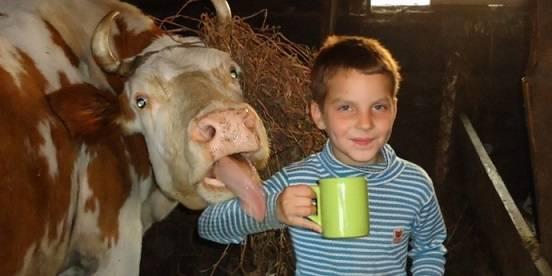 Ребёнок в коровнике с кружкой парного молока