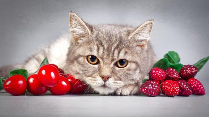 Малина, вишня и кот