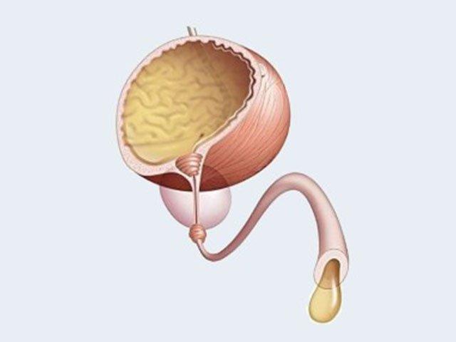 Мочевой пузырь (схема)