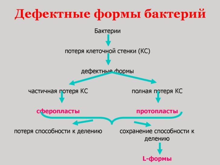 Схема мутации обычной бактерии в L-форму
