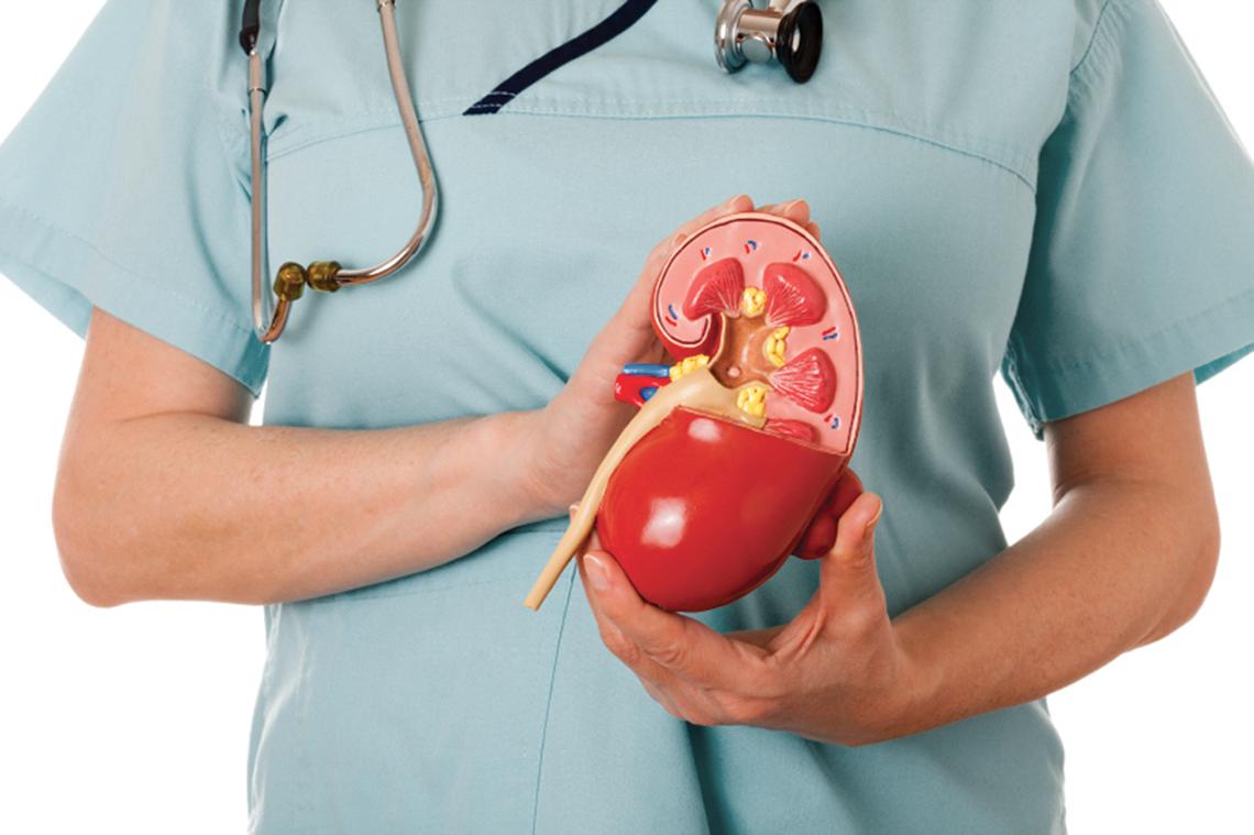 Почечные нефропатии: как узнать и лечить патологию