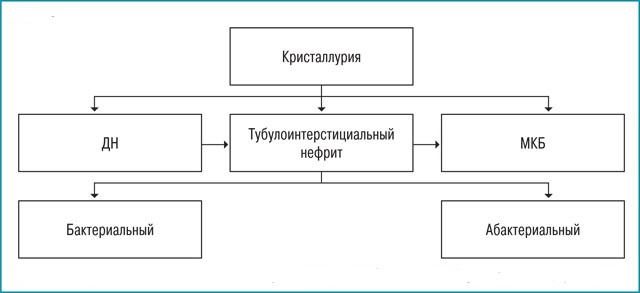 Стадии развития патологии почек