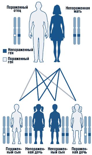 Аутосомно-доминантный тип наследования