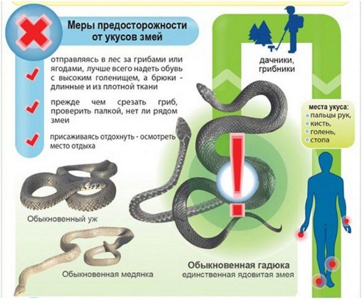 Профилактика змеиных укусов