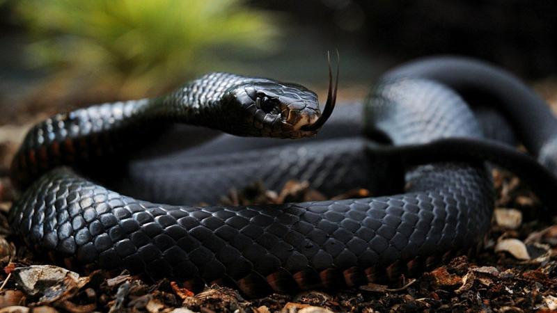 Что делать, если укусила змея
